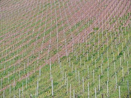 Background, Pattern, Vineyard, Slope, Curved, Bars
