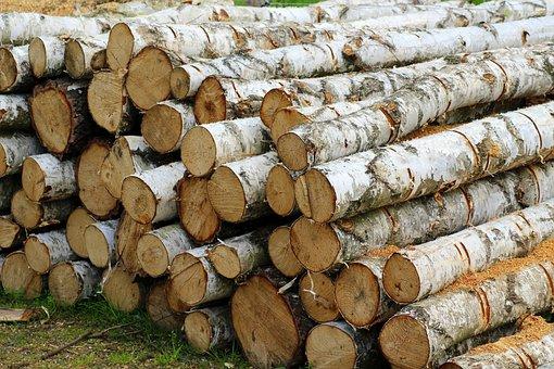 Tree, Cut, Birch, Batch, The Industry, Wooden, Firewood