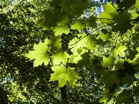 Leaf, Branch, Green, Shadow Play