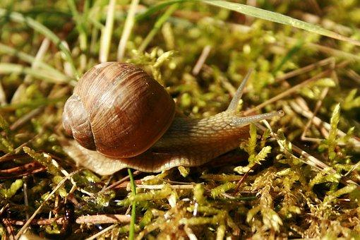 Slow, Slippery, Snail, Brzuchonóg, Nature