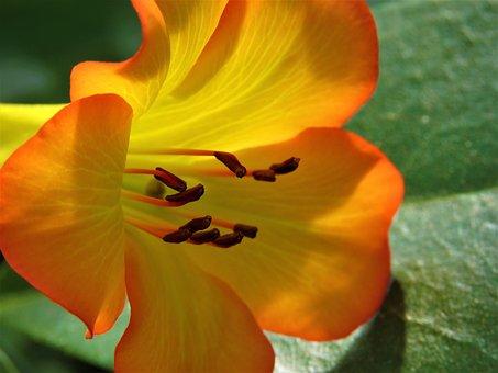 Nature, Flower, Flora, Garden, Leaf, Color, Outdoors
