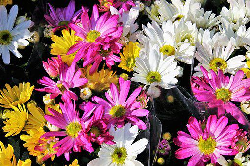 Bouquet, Camomile, Dyed, Colorful, Flowers, For You