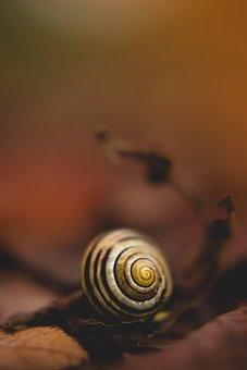 Snail, Spiral, Nature, Evertebrat, Shellfish, Close