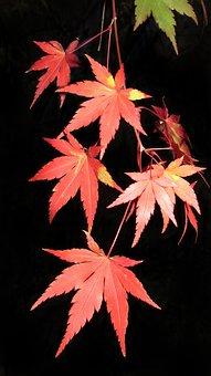Autumn, Leaf, Fall, Nature, Bright, Flora