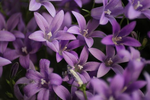 Flower, Nature, Plant, Floral, Garden, Summer, Flowers