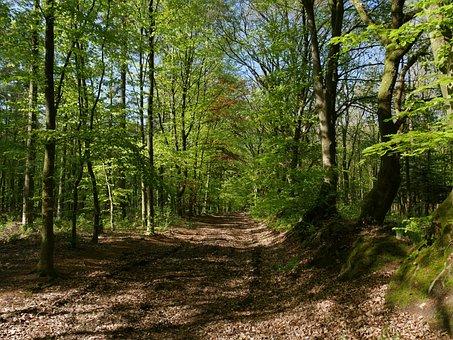 Wood, Nature, Tree, Landscape, Leaf, Forest, Glade