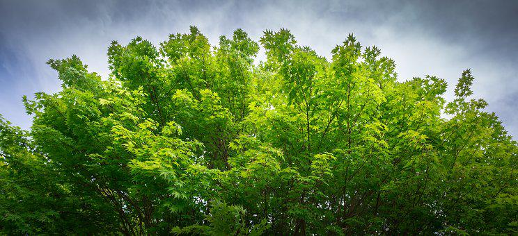 Nature, Wood, Leaf, Plants, Summer, Green, Forest