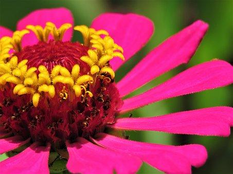 Flower, Nature, Flora, Garden, Summer, Petal, Floral