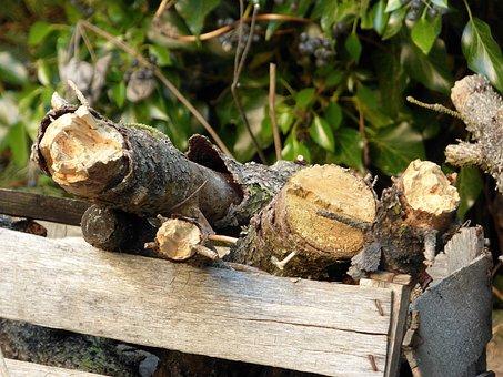 Nature, Tree, Food, Plant, Wood, Garden, Firewood