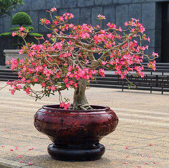 Flower, Garden, Tree, Plant, Park, Bonsai, Hanoi