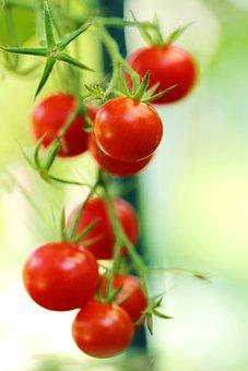 Food, Cherry, Tomato, Healthy, Health, Juicy, Delicious