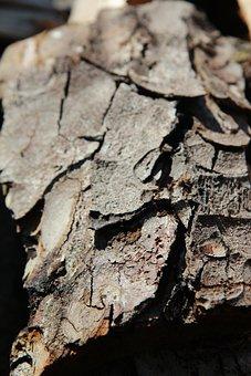 Bark, Bark Chestnut, Horse Chestnut, Tree Trunk