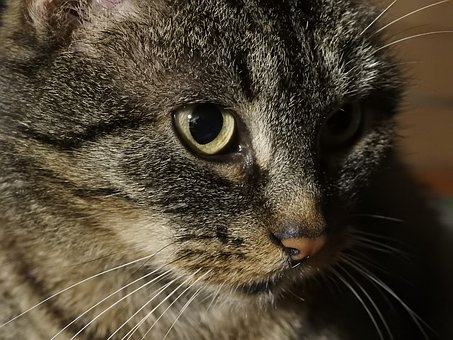 Cat, Mammals, Animals, Fur, Portrait, Kitten, Sight