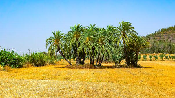 Landscape, Nature, Trees, Palm, Sky, Travel, Scenery