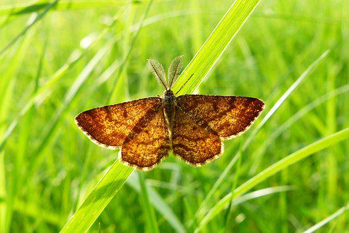 Butterfly Day, Nature, Insect, Summer, Lawn