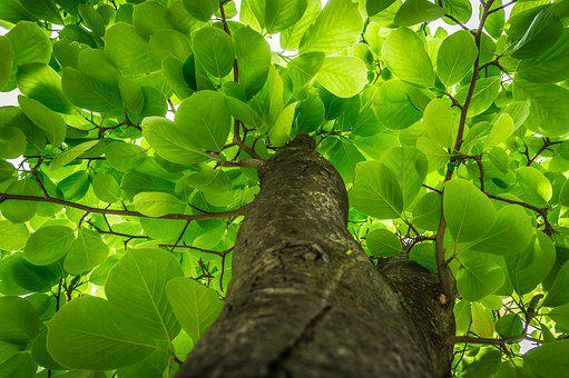 Leaf, Plants, Nature, Wood, Summer, Garden, The Leaves