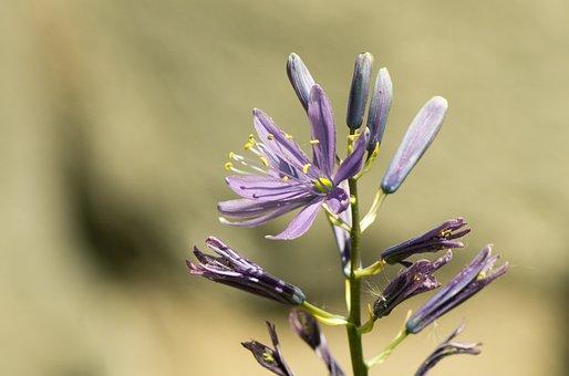 Nature, Flower, Plant, Summer, Leaf, Closeups, Macro