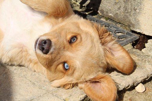 Animalia, Dog, Cute, Mammals, Pet, Domestic, Canidae