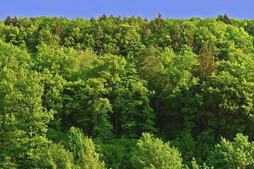 Trees, Mountain Forests, Forest, Morning Light, Morning