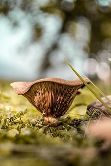 Nature, Close, Mushroom
