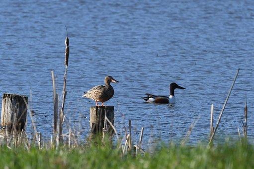 Birds, Body Of Water, Lake, Nature, Animal Life