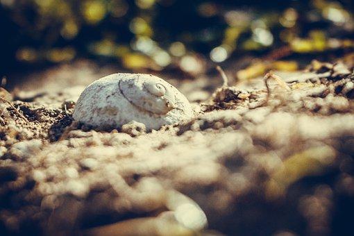 Nature, Animal, Wildlife, Little, Closeup, Slug Shell
