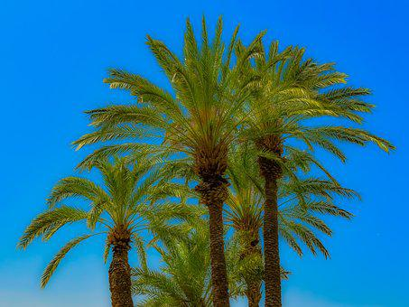Palm, Tropical, Paradise, Plant, Sky, Nature