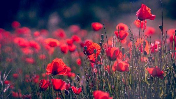 Plant, Field, Nature, Meadows, No Person, Summer, Color