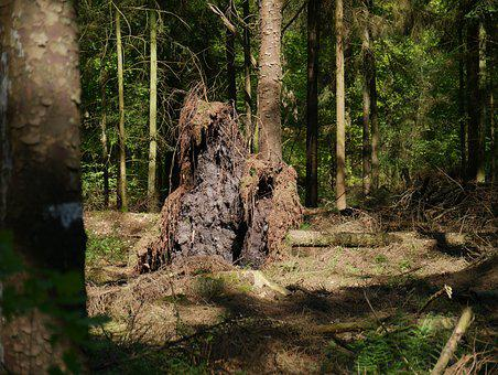 Tree, Wood, Nature, Plant, Root, Tree Root, Forest, Old