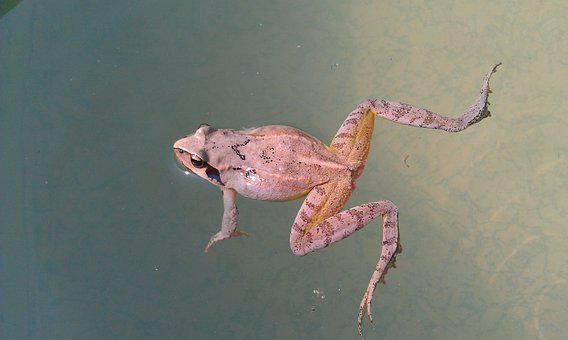 Frog, No One, Living Nature, Nature, Amphibian