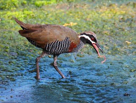 Bird, Wildlife, Nature, Outdoors, Animal, Wild