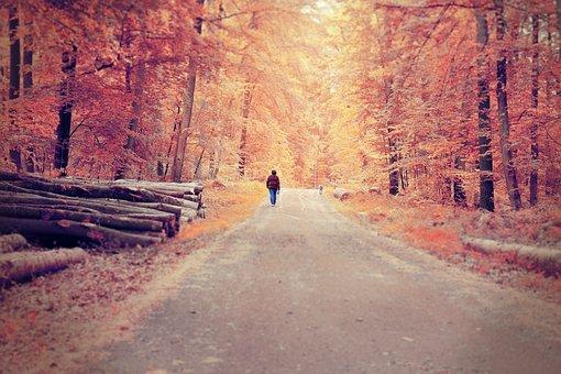Road, Tree, Nature, Landscape, Park, Wood, Travel
