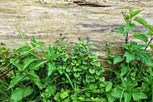 Plant, Nettle, Flower, Blue Flower, Wild Flower