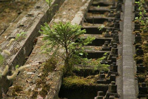 Tree, Rail Moss, Screw, Nature, Railway