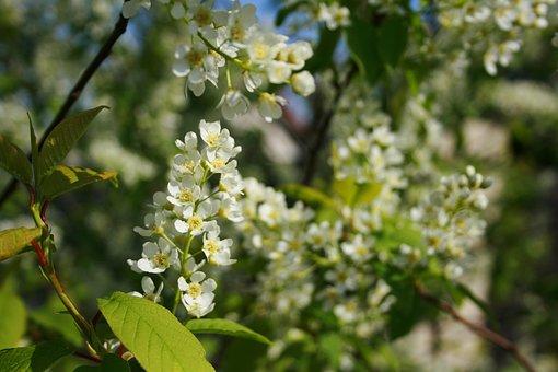 Flower, Plant, Nature, Tree, Season, Blooming, Leaf