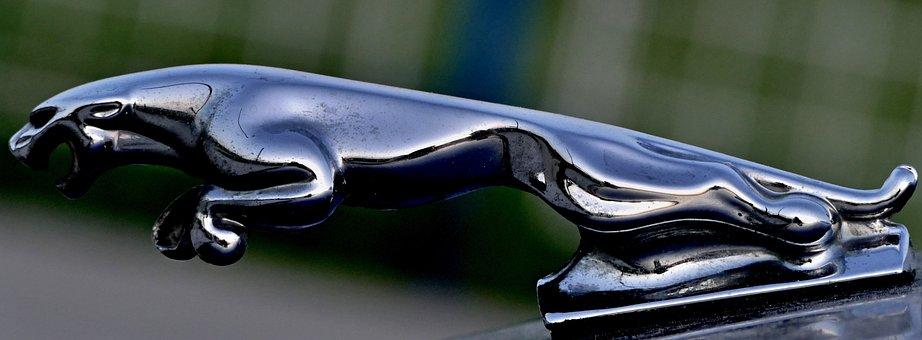 Jaguar, Silver, Character, Personal, Car