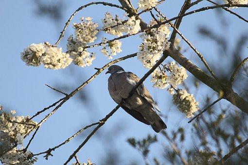 Tree, Nature, Bird, Outdoors, Branch, Sky, Wildlife
