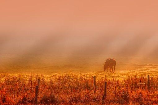 Sunrise, Dawn, Fog, Haze, Nature, Field, Horse, Fence