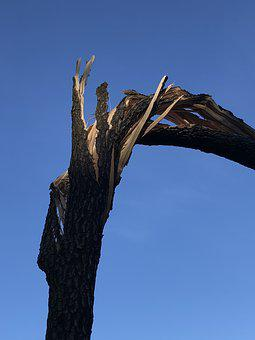Wood, The Destruction Of The, Storm, Trunk, Konar, Tree