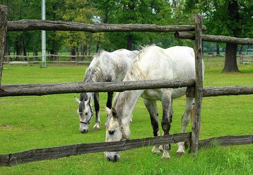The Horse, Horses, Grazing, Farm, Animals, Lawn