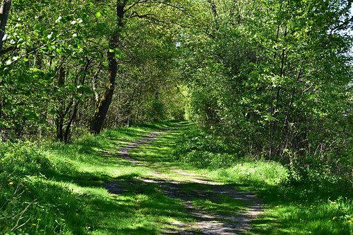 Nature, Landscape, Tree, Leaf, Summer, Rural, Idyllic