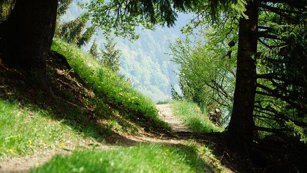 Nature, Wood, Tree, Landscape, Park, Path, Mountains