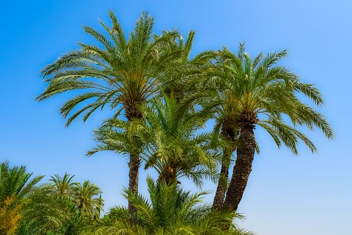 Palm, Trees, Tropical, Nature, Sky, Exotic, Plant