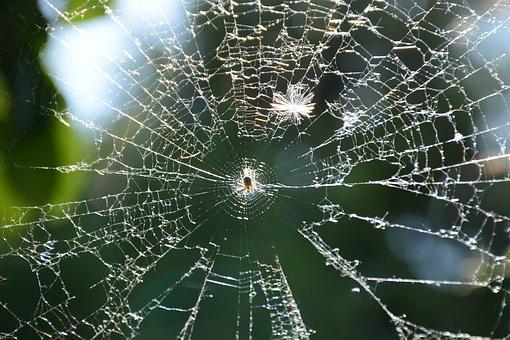 Web, Spider, Morning, Crusader, Insect, Network, Macro