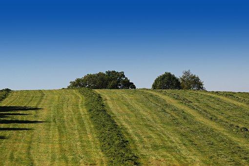 Agriculture, Meadow, Pasture, Summer, Mow, Landscape