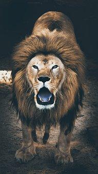 Lion, Jungle, Savage, Animal, Wildlife, Nature, Africa