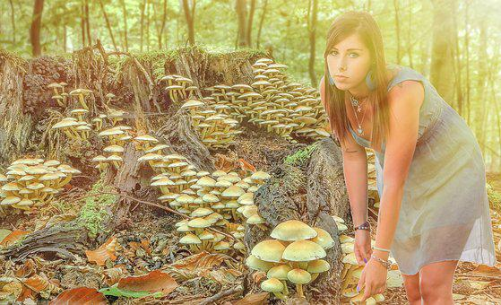 Woman, Collection, Bella, Nature, Forest, Collected