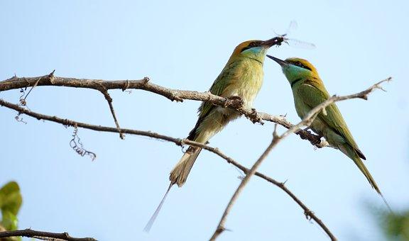Green, Birds, India, Bharat