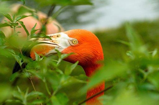 Nature, Leaf, Closeup, Tropical, Bird, Summer, Garden