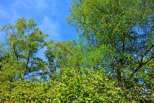 Tree Top, Tree, Branch, Foliage, Wood, Spring Leaves